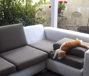 cat on outdoor couch